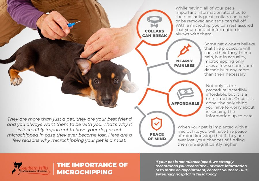 Importance of Microchipping